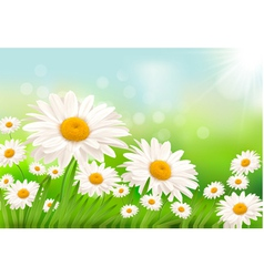 grass and daisies vector image