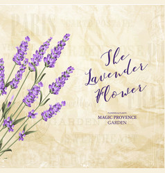 the lavender elegant card vector image