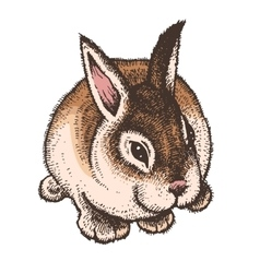 Hand drawn colored sketch of easter rabbit vector image