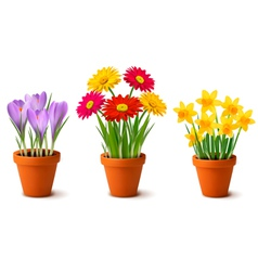 Vases with flowers vector