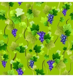 Blue grapes seamless pattern on green vector image