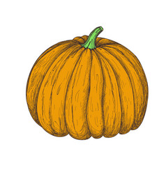 Fresh pumpkin hand drawn isolated icon vector