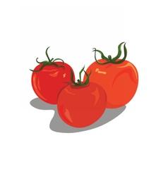 Fresh tomatoes vector