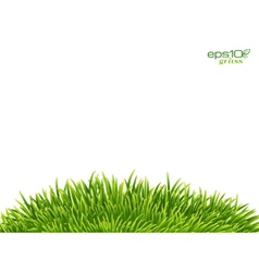 Green isolated grass hill on white background vector