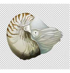 Sea nautilus on transparent background vector