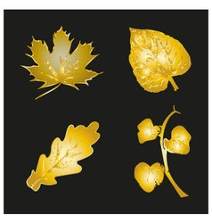 Set of golden leaves vector