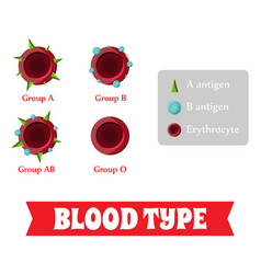 Blood group blood type vector