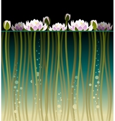 Water lilly and bubbles vector