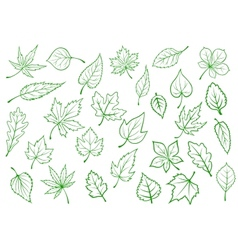 Green leaves set in outline style vector image vector image