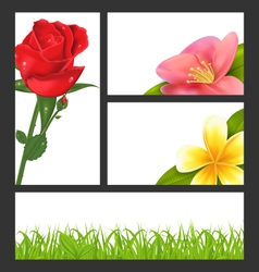 Invitation brochure with beautiful flowers rose vector image