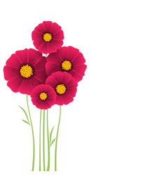 bunch of flowers dahlias vector image