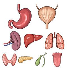 human organs set icons in cartoon style big vector image vector image
