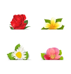 Beautiful flowers rose quince frangipani copy vector