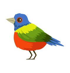 colorful tropical bird vector image