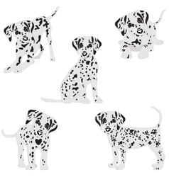 Dalmatians cute sad vector