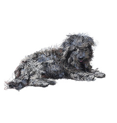 Drawing of lying poor shih-tzu dog isolated on vector
