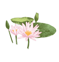 hand drawn water lily flowers vector image vector image