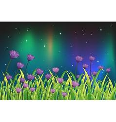 Violet flowers in the garden vector