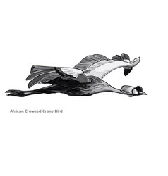 Flying african crowned crane bird vector