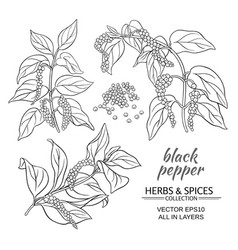 Black ground pepper vector