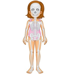 Skeletal system in human girl vector image vector image