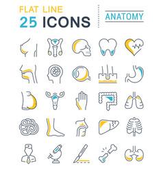 set flat line icons anatomy vector image