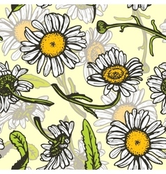 Beautiful vintage background with white daisies vector