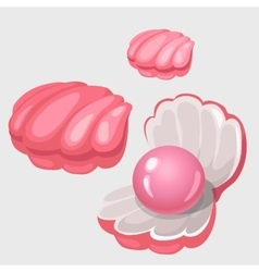 Open and closed pink shell box with pearl vector