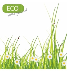 Spring green background grass and flower vector