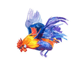 hand painted watercolor of flying bantam on white vector image