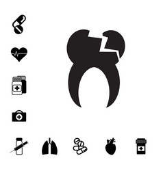 human root tooth molar vector image