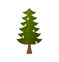 fir with cones isolated fir-tree on white vector image vector image