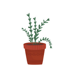 Herb in a flowerpot rosemary or oregano in a vector
