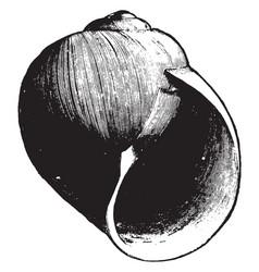 Sea snail vintage vector