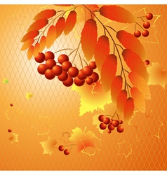 Autumn rowan vector