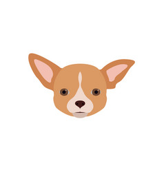 chihuahua dog in flat style vector image