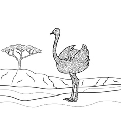 Ostrich coloring book for adults vector