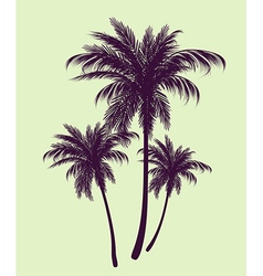 Palm trees in contours vector