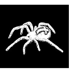 Cross spider araneus vector
