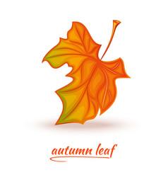 Fallen autumn leaf logo design vector