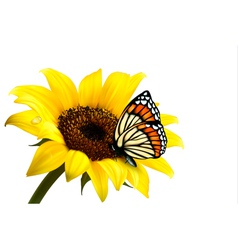 Nature summer sunflower with butterfly vector