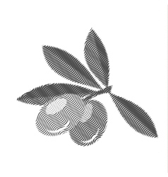 Olives engraving editable vector image