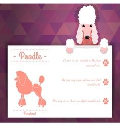 Poodle dog banner vector image