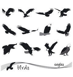 Collection of silhouettes of eagles vector