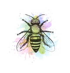 Bee vintage watercolor image vector