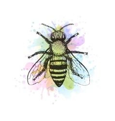 Bee vintage watercolor image vector image vector image