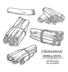 cinnamon set vector image