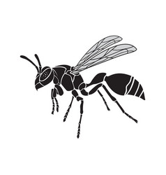 Wasp on a white background insect animal vector