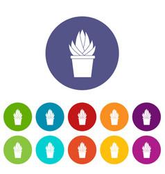 Aloe vera plant icons set flat vector