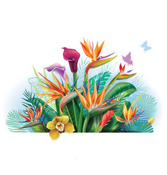 arrangement with strelitzia flowers vector image vector image